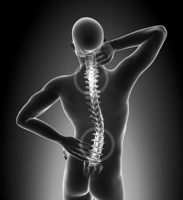 colonna_vertebrale