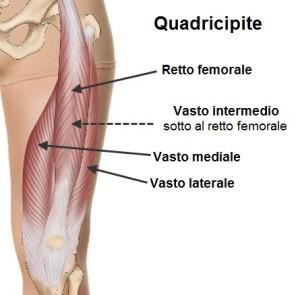 quads-anatomy-ita